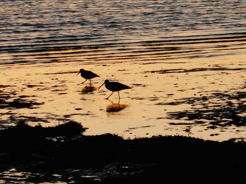 Birds on beach - Coastal Fife car-free adventures