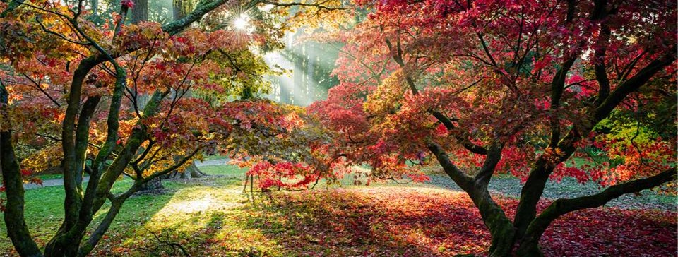 Colourful Autumn trees at Westonbirt Arboretum