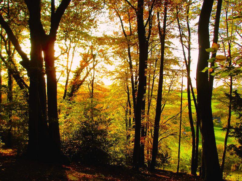 trees - Aylesbury car-free adventures