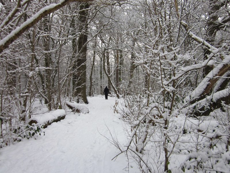 Snowy woods - Enfield car-free adventures