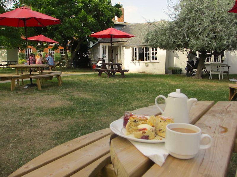 Cream tea in garden - Colchester car-free adventures