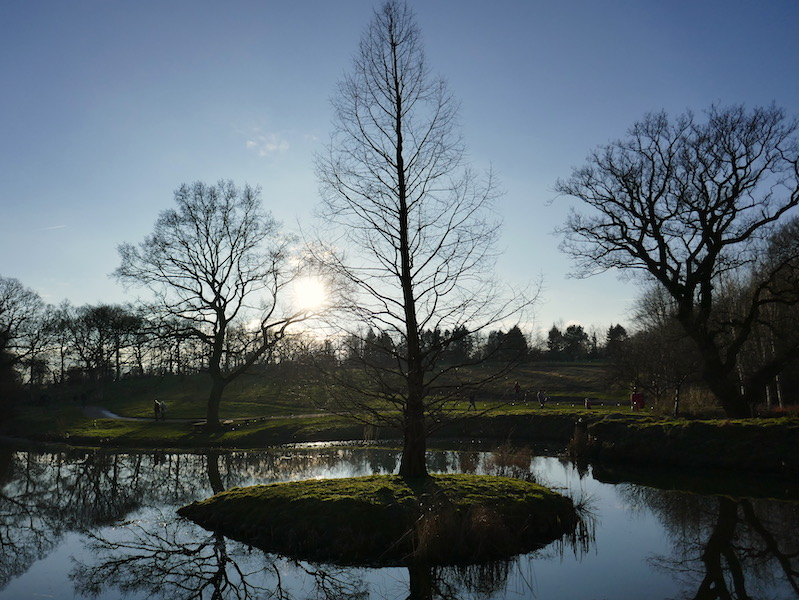 Trees and lake at Harlow Carr - Leeds car-free adventures