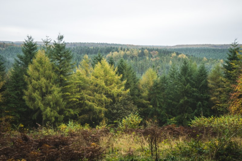 View over Dalby Forest