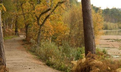 Delamere Path