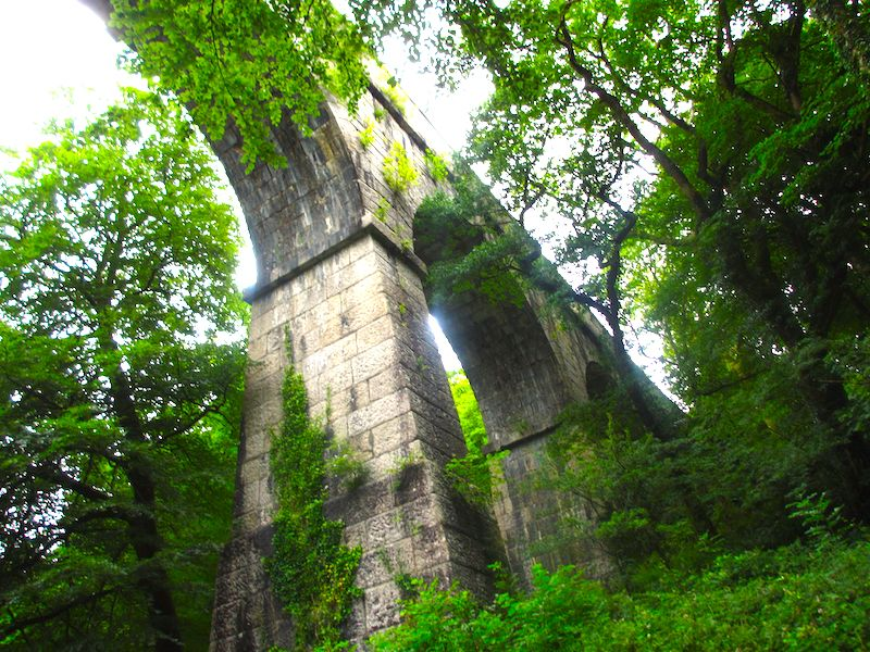 Viaduct in woodland - spotted on our Newquay car-free adventures