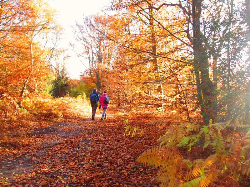 Epping Forest - from our Autumn colour car-free trips