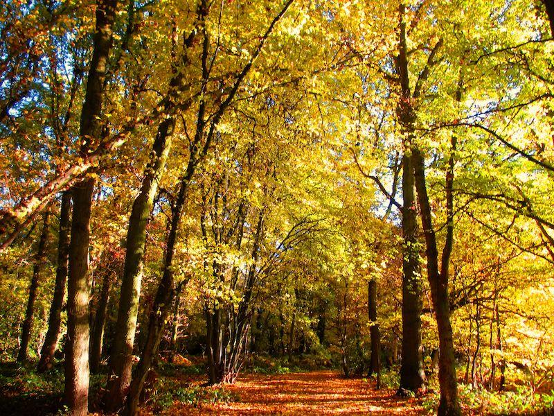 Sunlit Autumn trees - Autumn colour car-free trips