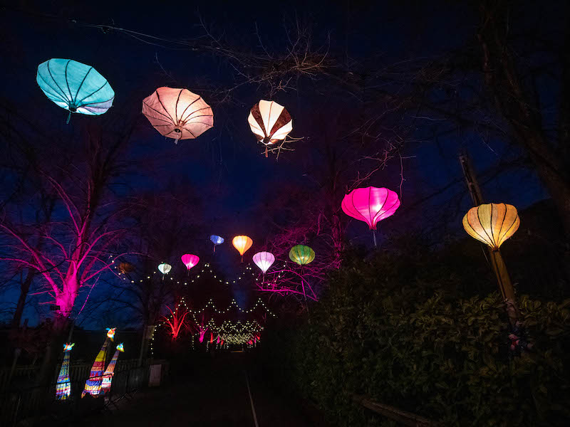 Chester Zoo Christmas lanterns - Car-free trips to see Christmas Magic