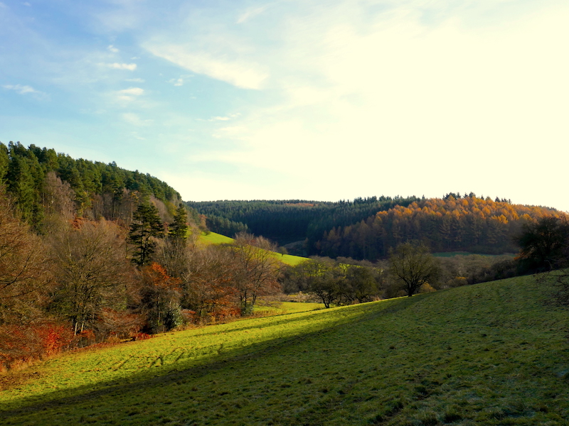 Dalby Forest - along the route of the Coastliner Buses